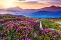 Picture mountains, sunlight, nature, sunlight, mountains, flower field, flower field, the sky, sky, nature, landscape, landscape