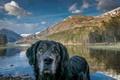 Picture dog, look, landscape, each