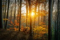 Picture the sun, autumn, forest, nature
