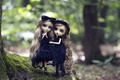Picture long hair, Gothic, nature, toys, blonde, doll, gatesy, girls