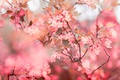Picture flowers, pink, spring