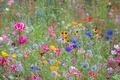 Picture field, summer, grass, flowers, meadow