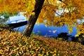 Picture boat, river, blue, autumn