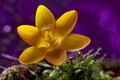 Picture bokeh, macro, flower, yellow