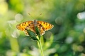 Picture blur, macro, greens, wings, butterfly, glare