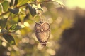 Picture macro, branch, light, bird, owl, metal, leaves