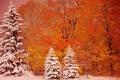 Picture autumn, snow, trees, ate, Michigan, Michigan, Munising, Munising