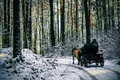 Picture forest, snow, trees, Winter, morning, frost, track, forest, road, nature, winter, snow, trip, morning, path, ...