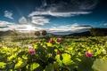 Picture Doomoolmeori - Yang Suri, Lotus Sunrise, Korea