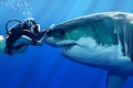 Picture water, shark, Girl, touch