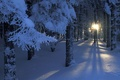 Picture light, lights, snow, trees, Winter, the sun, branches, forest