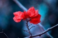 Picture nature, branch, red, macro, leaves