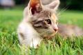 Picture cat, macro, cat, white, grass, cat