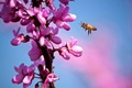 Picture flowers, macro, branch, bee, spring
