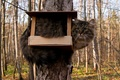 Picture tree, feeder, cat