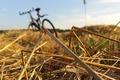 Picture #grass, #nature, #bike, #sunset