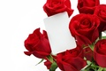 Picture roses, bouquet, red, Red, Roses, Valentines Day