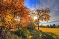 Picture rays, trees, leaves, field, the sky, grass, autumn, clouds