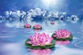 Picture the sky, water, clouds, flowers, Lotus