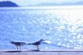 Picture sea, wave, summer, water, the sun, light, birds, glare, lights, heat, seagulls