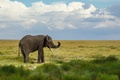 Picture nature, squirt, water, greens, elephant, clouds, the sky, grass, landscape, drops