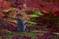 Picture focus, macro, orange, red, leaves, blur, Tree, autumn, maple