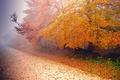 Picture fog, road, tree, autumn, nature
