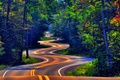 Picture markup, trees, Road