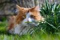 Picture cat, look, grass, cat