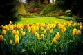 Picture Park, lawn, Canada, tulips, Queen Elizabeth Park