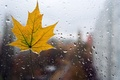 Picture glass, water, drops, macro, yellow, background, rain, Wallpaper, leaf, wallpaper, form, leaf, rain, widescreen, background, ...