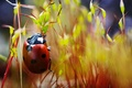 Picture speck, ladybug, crawling, plants