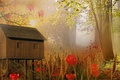 Picture flowers, house, style, background