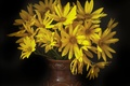 Picture the dark background, yellow, a bouquet of flowers