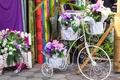 Picture flowers, flowers, bike, bouquet, floral
