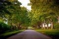 Picture road, trees, England, England, Norfolk, alley, Kings Avenue, Norfolk, Sandringham