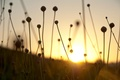 Picture dawn, beautiful sunset, nature, dry spare of grass, Dry spare of grass, dawn, beautiful sunset, ...