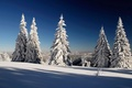 Picture tree, the sky, snow, shadow, winter