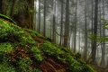 Picture forest, grass, trees, nature, tree, moss