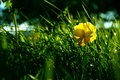 Picture grass, flower, green