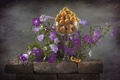 Picture flowers, apricots, Petunia