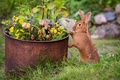 Picture grass, flowers, rabbit, red