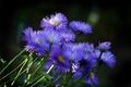 Picture flowers, plants, nature