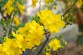Picture blossom, flowers, Macro, yellow