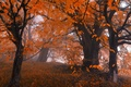 Picture forest, fog, trees, leaves, Nature, autumn, leaves, autumn, fog, trees, falling leaves, nature, forest