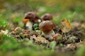 Picture bokeh, mushrooms, autumn