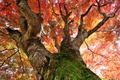 Picture autumn, leaves, tree, moss, trunk, crown