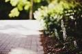 Picture leaves, macro, flowers, green, background, widescreen, Wallpaper, blur, wallpaper, flowers, flower, widescreen, flowers, background, macro, ...