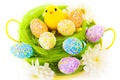 Picture flowers, eggs, Easter