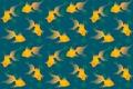 Picture algae, pattern, tail, goldfish